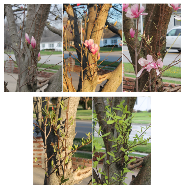 Spring Picture Sequencing Activity